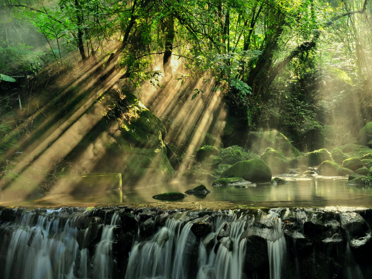 Sunlight shining through the leaves of trees near waterfall.